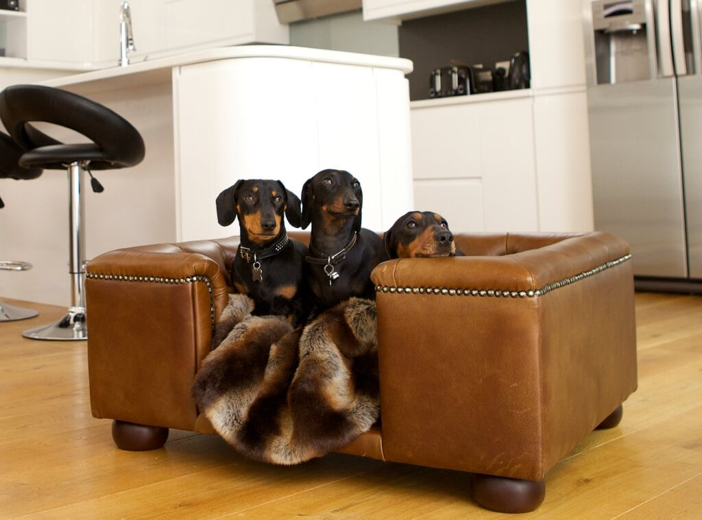 credit: luxuriousdogbeds.co.uk
